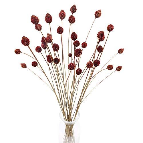 HUAESIN 30 PCS Getrocknete Blumen deko Natürliche Getrocknete Tannenzapfen Strauß Trockenblumen für Hochzeit Hause Party Fotografie Vase Blumenarrangement Dekoration