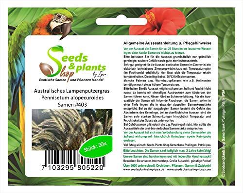 Stk - 20x Australisches Lampenputzergras Pennisetum alopecuroides Samen #403 - Seeds Plants Shop Samenbank Pfullingen Patrik Ipsa