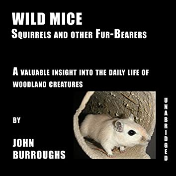 Wild Mice (Unabridged), a valuable insight into the daily life of woodland creatures, by John Burroughs