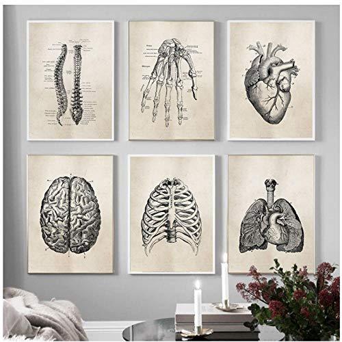 WANGHH Ciencia de la anatomía Humana Pintura de impresión Vintage Anatomía médica Lienzos Carteles Cuadros de Pared para médico Clínica Decoración para el hogar (30X40Cm Sin Marco)