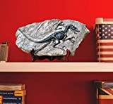 LAGOM HOUSE Dinosaur Fossil | Resin Dinosaur Skeleton Model / Skull / Statue / Bones / Figurines | T rex Skull Replica Fossils | Dinosaur Decor for Bookshelf | Desktop | Shelf Display 13x 7in