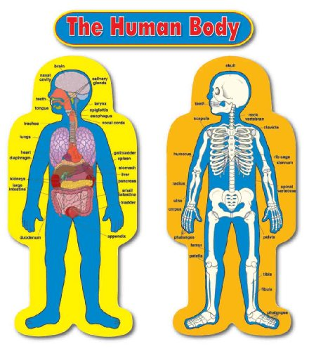 Carson Dellosa Child-Size Human Body Bulletin Board Set (3215)