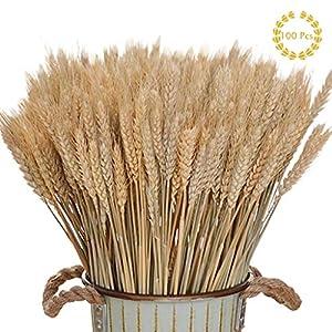 Amycute 100 pcs Ramo Trigo Artificial decoración Flores Secas Naturales del Trigo del Color primario Ramo de espigas…