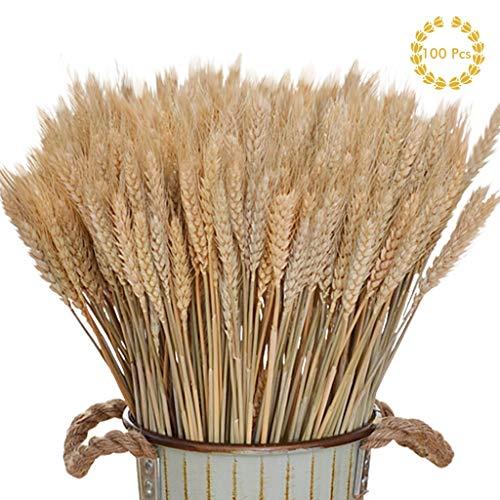 Amycute 100 pcs Ramo Trigo Artificial decoración Flores Secas Naturales del Trigo del Color primario Ramo de espigas para Decorativa Mesa en casa Decoraciones del Banquete de Boda