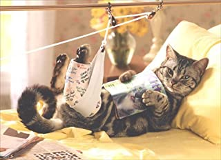 Cat in Traction Get Well Card