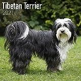 Tibetan Terrier - Tibet Terrier 2021: Original Avonside-Kalender [Mehrsprachig] [Kalender] (Wall-Kalender)