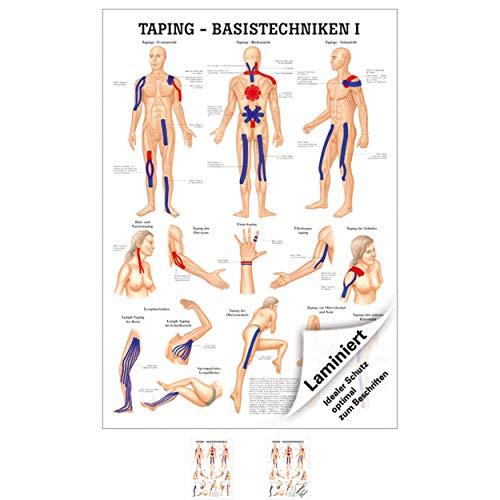 Sport-Tec Taping Basistechniken I Mini-Poster Anatomie 34x24 cm medizinische Lehrmittel