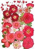 Naturali Pressati Fiori per Decorazioni Floreali Scrapbook Artigianale Fiori Pressati Secchi Reali per Resina Epossidica Gioielli Art Craft (Rosso)