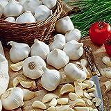 Soteer Seed House - Graines de ail biologiques Plante Spécialité Ail Graines de légumes Ail Légumes Graines vivaces pour balcon/terrasse de jardin