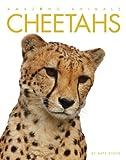 Amazing Animals: Cheetahs