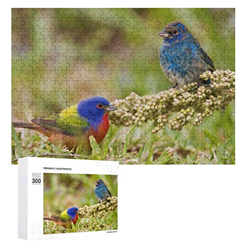 Jigsaw Puzzles 300 Pieces for Adults Large Piece Puzzle Painted Bunting Passerina Citria Adult Male 2 Fun Game Toys Birthday Gifts Fit Together Perfectly
