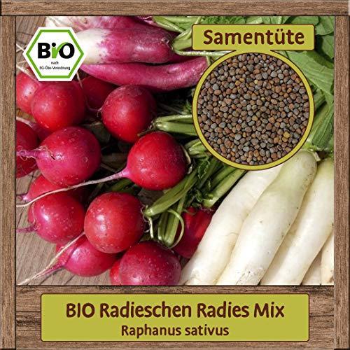 Samenliebe BIO Gemüse Samen Radieschen Radies MIX (Raphanus sativus) | BIO Radieschensamen Gemüsesamen | BIO Saatgut für ca. 1,5 m²