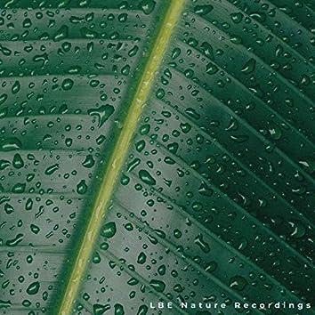 Gentle Rain Sounds 2