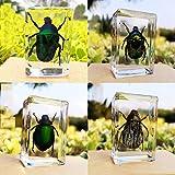 Espécimen de insecto,Juego Insectos Reales Resina Espécimen Stem Set,Espécimen de Insecto Real de Resina,para Escritorio,pisapapapapeles,Insectos,Ciencias,aulas,taxidermia para la educación científica