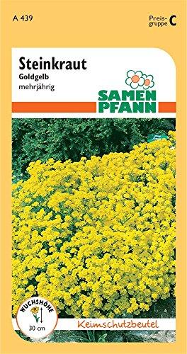 Samen Pfann A439 Steinkraut gold-gelb (Steinkrautsamen)