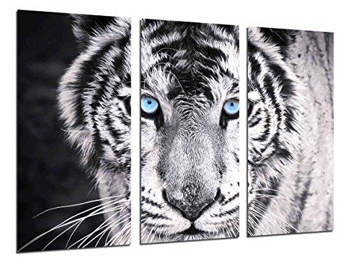 Cuadros Cámara Cuadro Fotográfico Tigre Blanco y Negro, Ojos Azules,