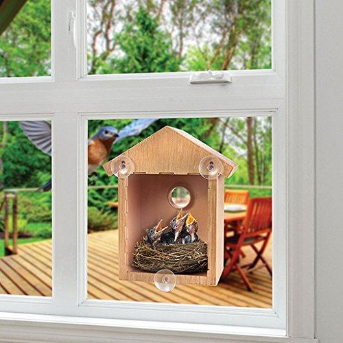 autone DIY Holz Fensterbild Vogelhaus mit Saugnäpfen Outdoor Garten Füttern New
