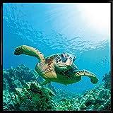 1art1 Unterwasserwelt Poster Kunstdruck und