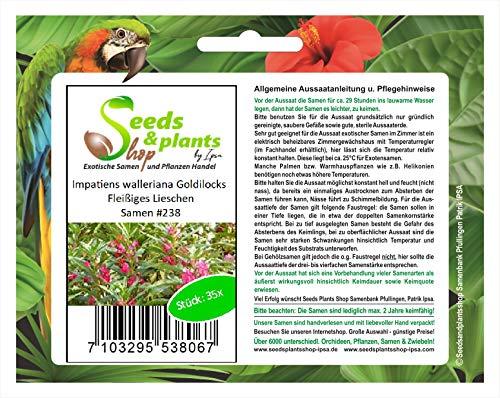 Stk - 35x Impatiens walleriana Goldilocks Fleißiges Lieschen Samen #238 - Seeds Plants Shop Samenbank Pfullingen Patrik Ipsa