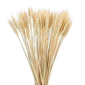 NAHUAA 4 pcs Flores Secas Natutral Flores Artificiales Espigas de Trigo para Interior Exterior Hogar Boda Dormitorio…