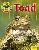 Toad (Wildlife Watchers)
