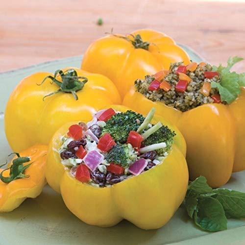 GETSO 10 - Seeds: Organische Yellow Stuffer Tomatensamen - Eine sehr einzigartige Gourmet Tomaten! Kräftiges !!!