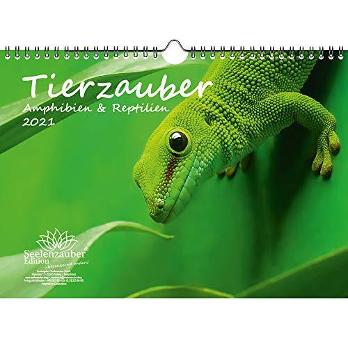 Tierzauber Amphibien und Reptilien DIN A4 Kalender für 2021 - Seelenzauber