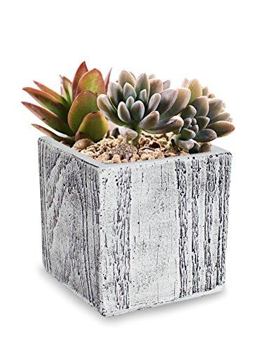 Dahlia Wood Grain Like Handmade Concrete Succulent Planter/Plant Pot/Flower Pot/Bonsai Pot, Cube