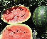 Bobby-Seeds Melonensamen Mini Love F1 Wassermelone Portion