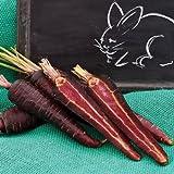 5 gramos semillas de Purple Sun Zanahorias Convencional y granulados