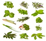 miscela di erbe (erbe culinarie) - 14 tipi - 1630 ++ semi - ordinati per tipo -