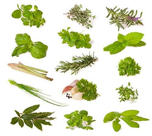 Kräuter Mix (Küchenkräuter) - 14 Arten - 1630 ++ Samen - sortenrein verpackt -