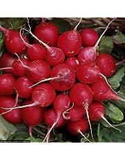 Kraft Seeds Radish Vegetable Seeds (Red, Pack of 2)