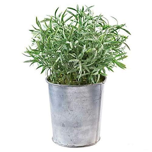 Kleine Kunstpflanze/Dekopflanze im Zink Topf - Tolle Auswahl - Künstlich & Naturgetreu - Kräuter/Kräutertöpfe - Unecht - Hochwertige Tischdeko/Küchendeko (Rosmarin - Höhe: 20cm)