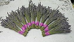 Buy 10 Dried Grosso or Royal Velvet Bundles