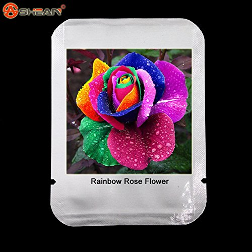 100 graines / paquet Four Seasons Semer les graines de fleurs vivaces, Rainbow Rose Facile à planter