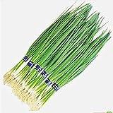 i deliziosi semi di scalogno in erba cipollina verde argento sono facili da coltivare e assaggiano semi di ortaggi di marca forte da 300 g