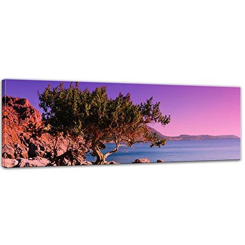 Bilderdepot24 Bild auf Leinwand | Mediterraner Baum auf Rhodos - Griechenland I in 160x50 cm als Panorama Wandbild XXL | Wand-deko Dekoration Wohnung modern Bilder | 201789