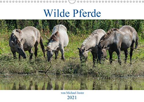 Wilde Pferde von Michael Jaster (Wandkalender 2021 DIN A3 quer)