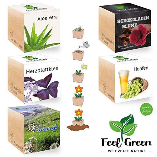 Feel Green Ecocube Special Set de 5 variétés - 25% Economique dans Le Paquet, Plantes dans la Vague en Bois, idée Cadeau Durable, Grow Your Own/Culture, Made in Austria