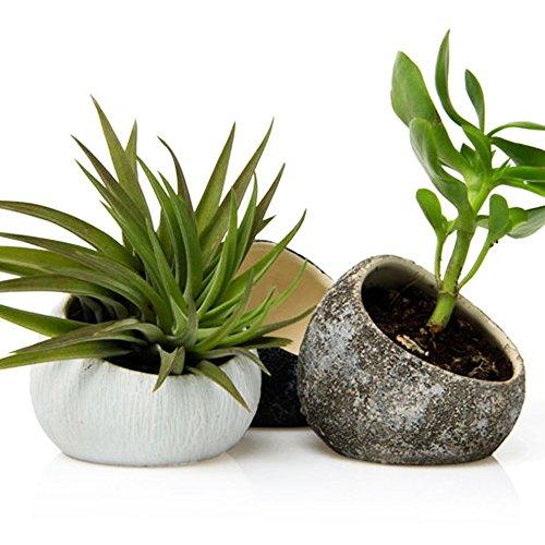 Coulette - Koski, Petite plante ovale en céramique faite à la main, Tillandsia, porte-bromeliade et récipient pour succulents et cactus, lot de 3, 1 pièce par blanc, brun chocolat, noir