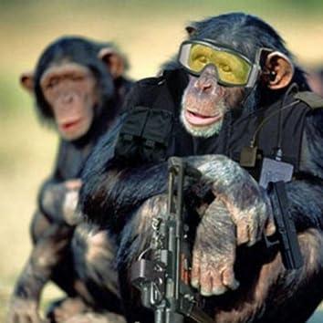 Monkey Swat