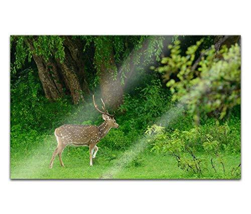 Acrylglasbilder 80x50cm Reh Wald Tier Geweih Natur Rehe Acryl Bilder Acrylbild Acrylglas Wand Bild 14H679