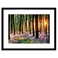 Bluebell Wood Sunrise Trees Photo Framed Wall Art Print