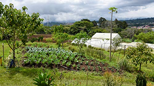 Visit a Family-Owned Organic Farm in Costa Rica
