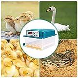 GJCrafts Incubatrice di Uova Girauova Automatico LED Controllo della Temperatura 16 Uova può Anche Essere Usato Senza Alimentazione per Uova di Pollo da cova Anatra Quaglia Uccello