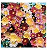 Premier Seeds Direct HOL06F Feigenblättrige Stockrosen BlumenSamenmischung (Packung mit 100)