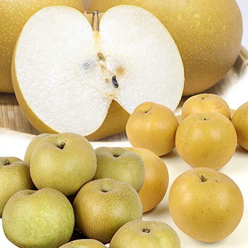 梨 青森産 大特価 完熟赤梨(約10kg)木箱 品種おまかせ(豊水・幸水・長十郎・多摩など)なし 国華園