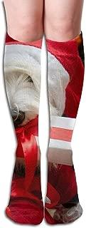 Christmas Schnauzer Women's Fashion Knee High Socks Casual Socks 50cm