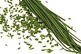 150 graines Aromatiques - CIBOULETTE - Allium schoenoprasum